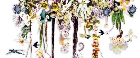 Der Blumensammler - Über das Zusammenspiel von Zeit, Erinnerung und Blumen